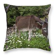 Donkey Grazing In Greece Throw Pillow