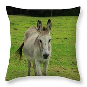 Donkey On A Farm Throw Pillow