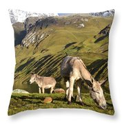Donkeys Grazing In The Mountains Throw Pillow