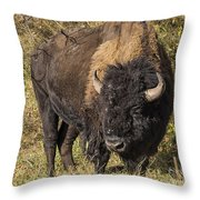 Don't Mess With This Bison Throw Pillow