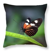 Doris Longwing Butterfly 2017 Throw Pillow