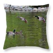 Double Duck Landing Throw Pillow