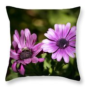 Double Purple African Daisy Throw Pillow