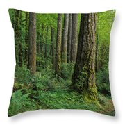 Douglas-fir Throw Pillow