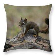 Douglas' Squirrel On The Rocks Throw Pillow