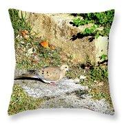 Dove  #9225 Throw Pillow