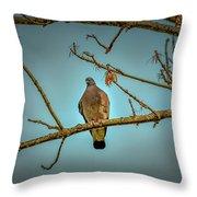 Dove #g2 Throw Pillow