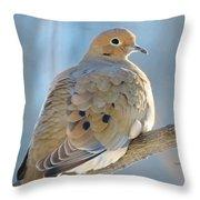 Dove In Evening Light Throw Pillow
