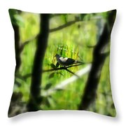 Dove In The Everglades  Throw Pillow