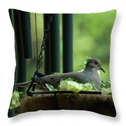 Dove Nesting, Balcony Garden, Hunter Hill, Hagerstown, Maryland, Throw Pillow