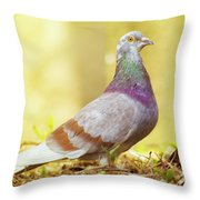 Dove  Standing Close Up Throw Pillow