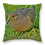 Dove With Hdr Throw Pillow