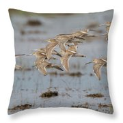 Dowitchers Throw Pillow