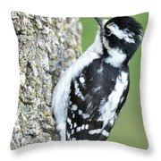 Downy Throw Pillow