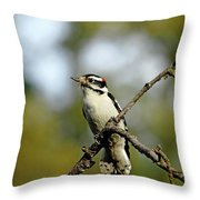 Downy Woodpecker In Fall Throw Pillow
