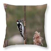 Downy Woodpecker On Cattails Throw Pillow