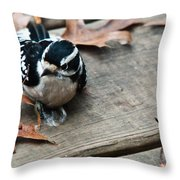 Downy Wooodpecker Picoides Pubscens Throw Pillow