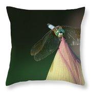 Dragon Fly Lotus Throw Pillow