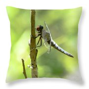 Dragonfly Slow Dance Throw Pillow