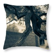 Dragon Tree Throw Pillow