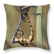 Dragonflies Mating Throw Pillow
