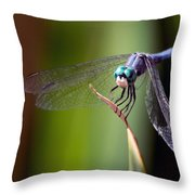 Dragonfly 0367 Throw Pillow