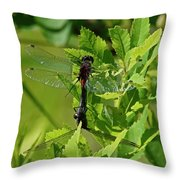 Dragonfly 1 Throw Pillow