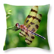 Dragonfly 10 Throw Pillow