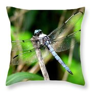Dragonfly 13 Throw Pillow