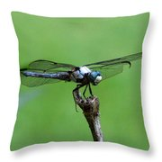 Dragonfly 14 Throw Pillow