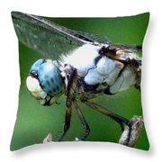Dragonfly 16 Throw Pillow