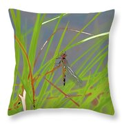 Dragonfly 4 Throw Pillow