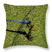 Dragonfly 73 Throw Pillow