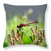 Dragonfly 8 Throw Pillow