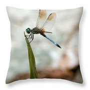 Dragonfly At Cypress Gardens Throw Pillow
