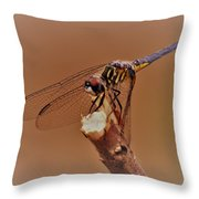 Dragonfly Beauty Throw Pillow