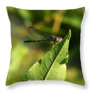 Dragonfly Called Funny Face Throw Pillow