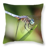 Dragonfly Captures Tiny Cockroach Throw Pillow