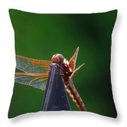 Dragonfly Cling Throw Pillow