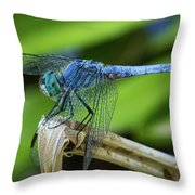 Dragonfly Color Throw Pillow