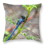 Dragonfly Delight Throw Pillow
