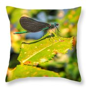 Dragonfly Dragonfly  Throw Pillow