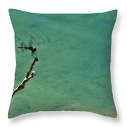 Dragonfly Exercising Wings Throw Pillow