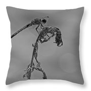 Dragonfly In Black And White Throw Pillow