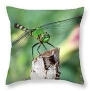 Dragonfly In The Flower Garden Throw Pillow