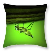 Dragonfly Nymph Throw Pillow