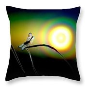 Dragonfly Of Color Throw Pillow