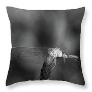 Dragonfly On A Flower In Black And White Throw Pillow