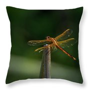 Dragonfly On A Twig Throw Pillow
