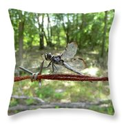 Dragonfly On Barbed Wire Throw Pillow